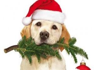 Ein-Hund-rettet-Weihnachten_Amazon._SX342_SY299_